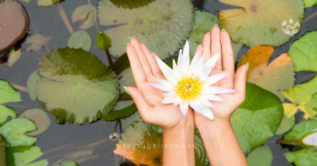 5 Cualidades de la Flor de Loto que te Enamorarán por Crea tu Belleza Remedios Naturales